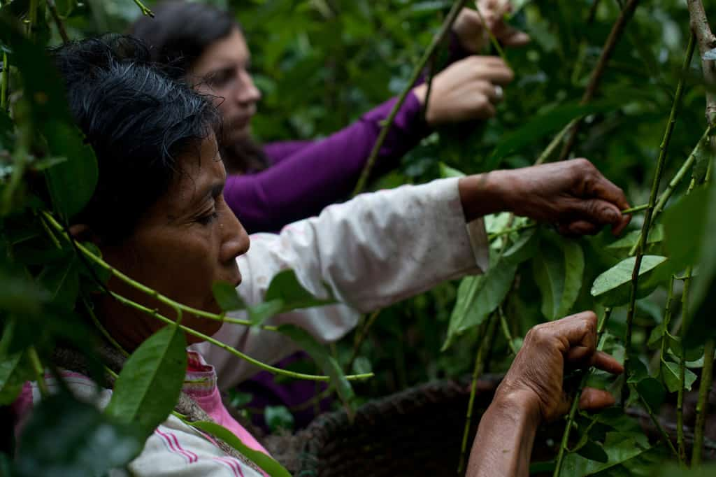 Runa Clean Energy, working with farmers in Ecuador