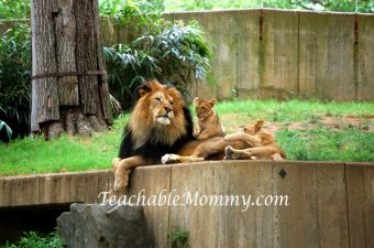 Almost Wordless Wednesday at the National Zoo