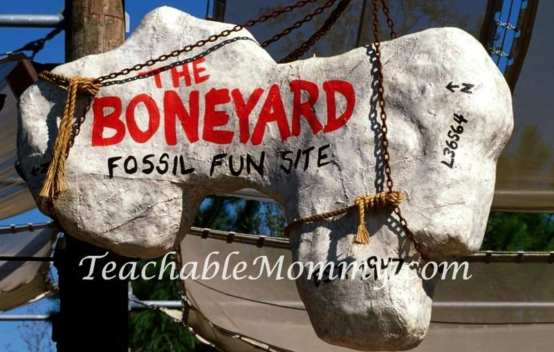 Walt Disney World free activities, Dinosaur Boneyard at Disney