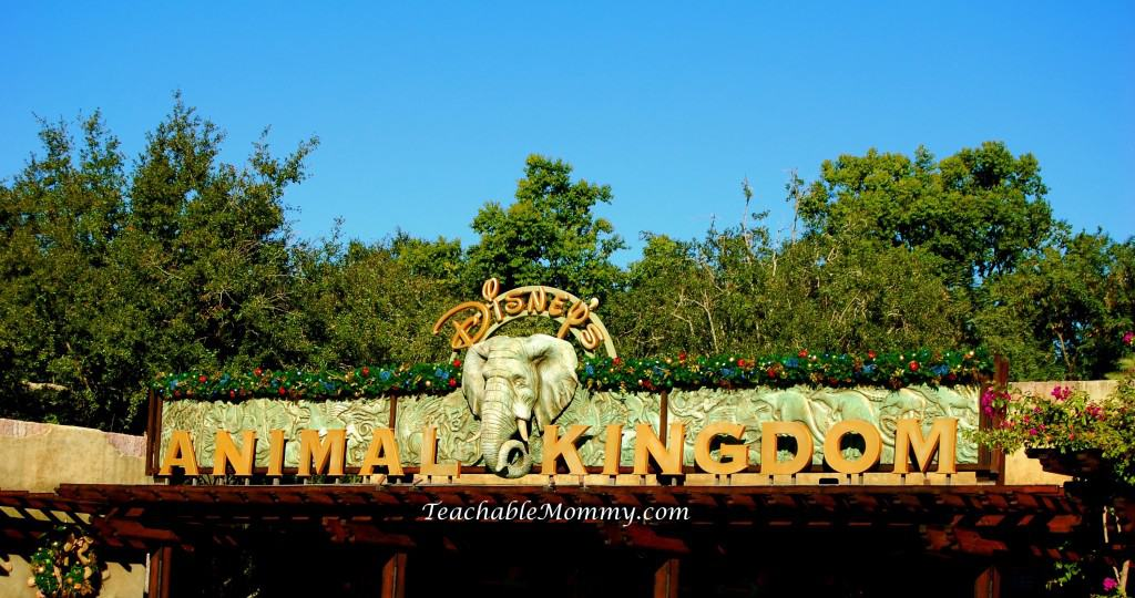Disney's Animal Kingdom, Animal Kingdom, Walt Disney World, #DisneySMMC