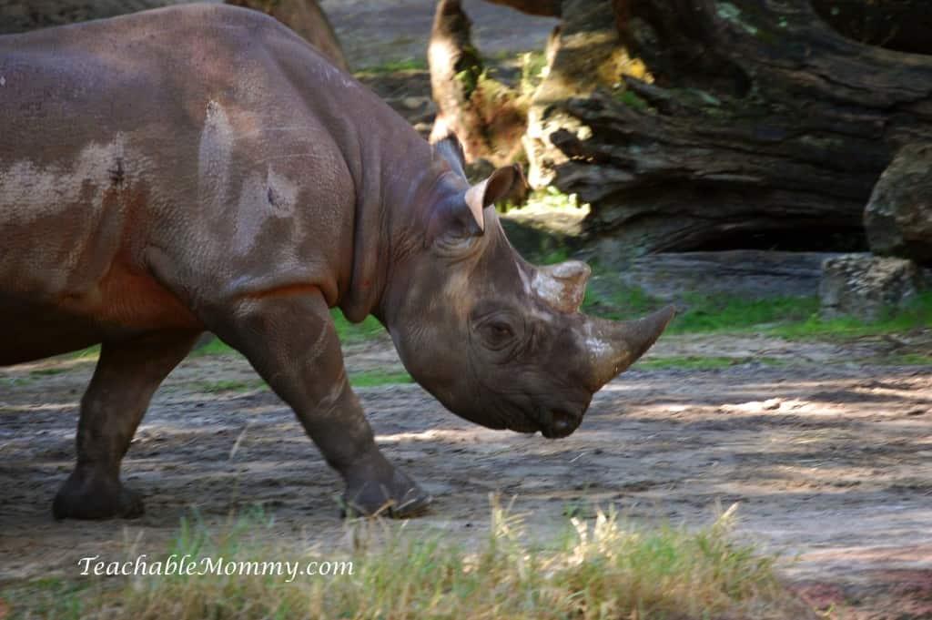 Disney's Animal Kingdom, Animal Kingdom, Walt Disney World, #DisneySMMC, Rhino