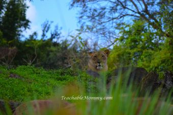 Wordless Wednesday Kilimanjaro Safaris