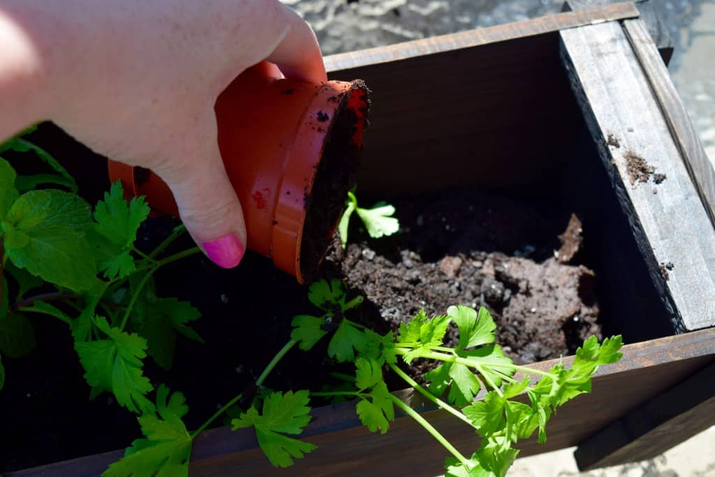 Eco Boys and Girls, ebooks for kids, Earth Day ideas, DIY Deck Organic Herb Garden, Earth Day ideas for kids, organic gardening, deck garden, deck box, #EcoBoysAndGirls #ad