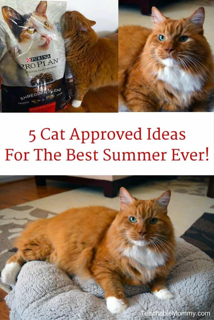 4 Cat Approved Ideas for the Best Summer Ever, #PawstoSavor #collectivebias sponsored