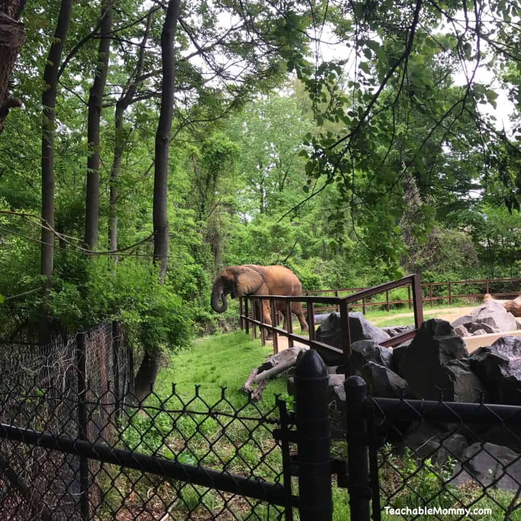 Day at the Maryland Zoo