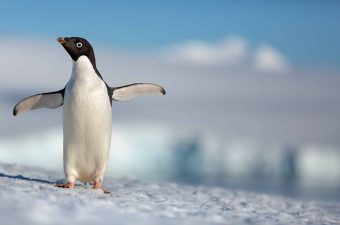First Look at Disneynature's Penguins