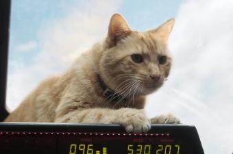 Captain Marvel Review, Goose The Cat