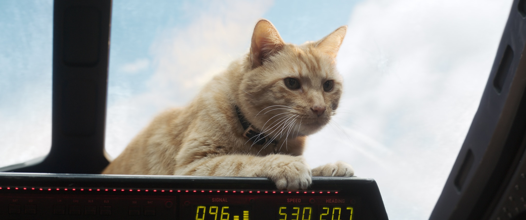 Captain Marvel Review, Goose The Cat