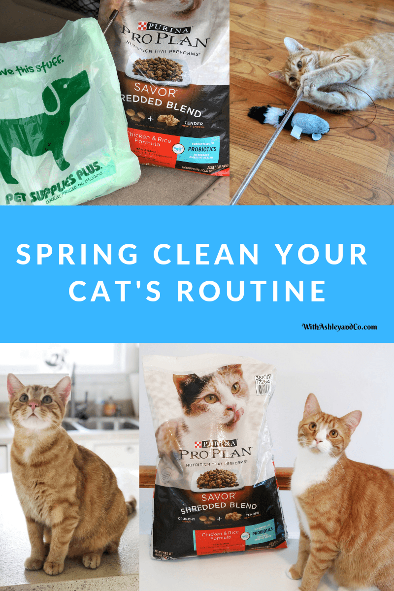 Spring Clean Your Cat's Routine