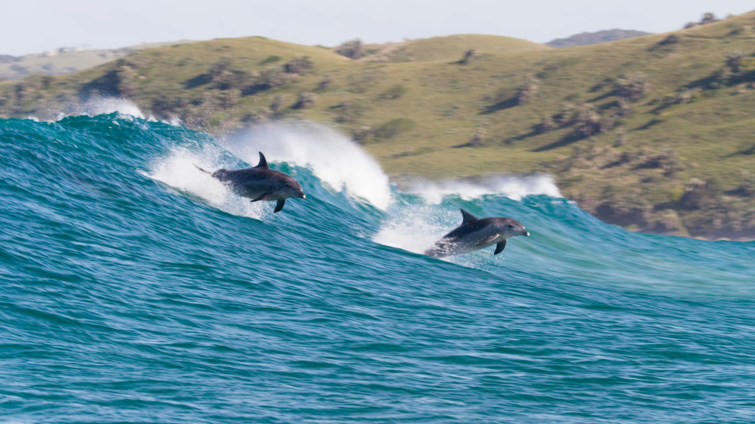 Earth Day Disney Plus Dolphin