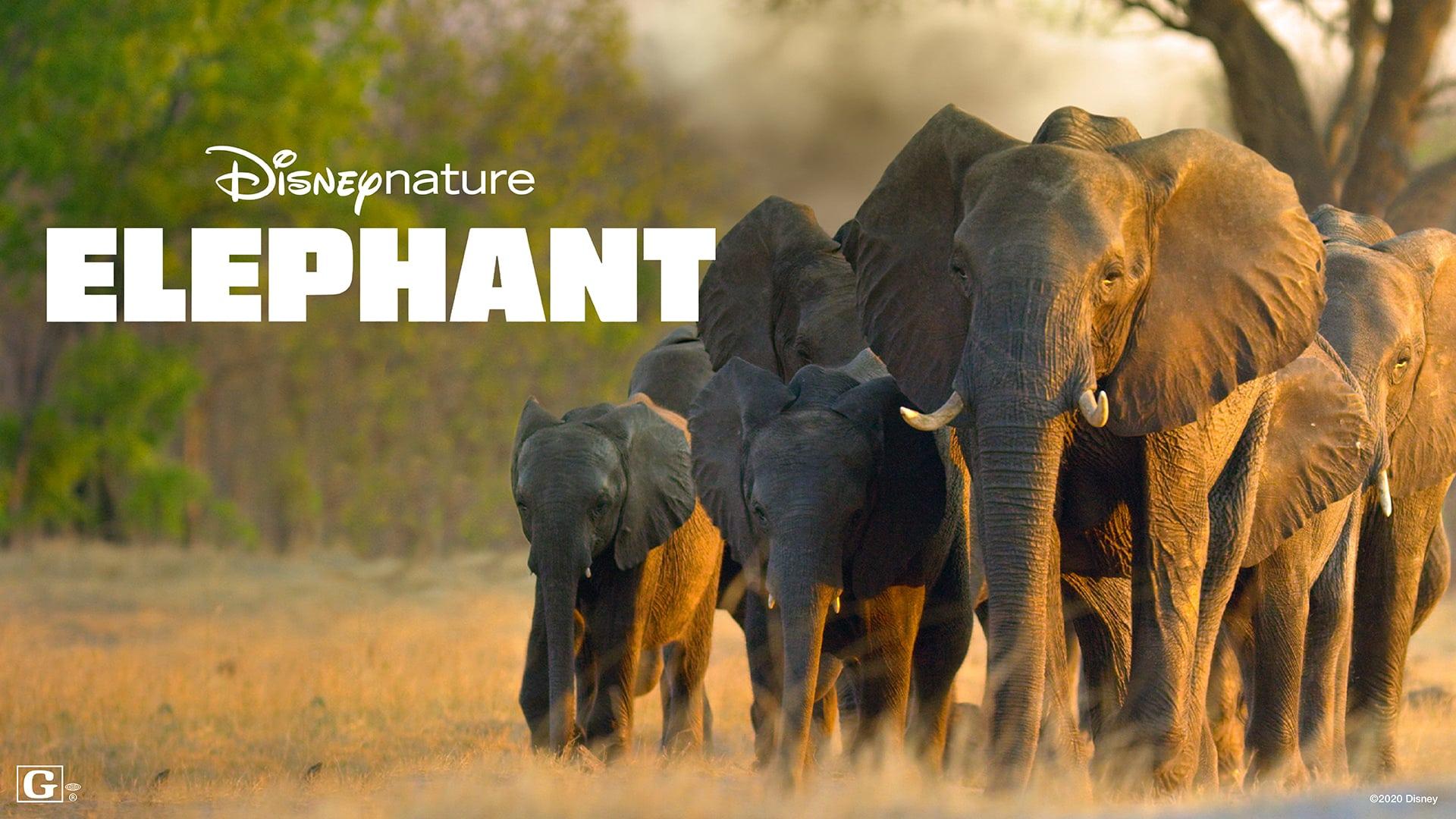 Earth Day Disney Plus Elephant